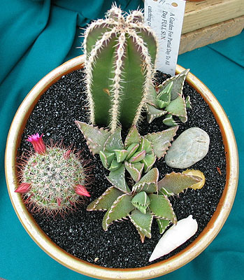 Catching Cactus at Garberville Farmers Market 2003