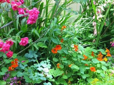 flowers garden in town