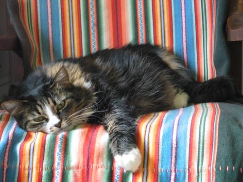 Lazy Kaya 2008