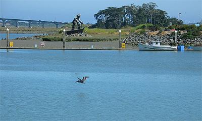 Eureka - Pelican in flight